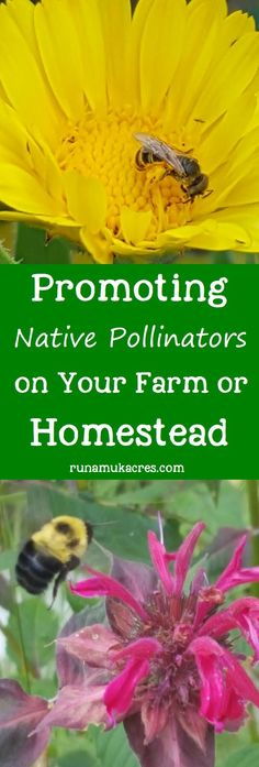 By encouraging native bees you can promote the ove…