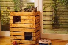 Decorating Bookshelves, Cat Playground, Homemade Muesli, Balsamic Beef, Office Wall Art, Home Room Design, Diy Garden Decor, Potpourri, Tigger