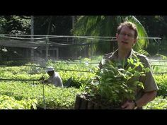 Smithsonian Science | Youtube | Invasive plant species are threatening native species across the globe. Learn how scientists at the Smithsonian Tropical Research Center in Panama are trying to fight one species of grass in Panama that is wreaking havoc on the country's tropical biodiversity.
