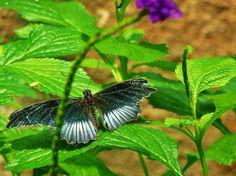 Butterfly, Niagra Falls, Ontario