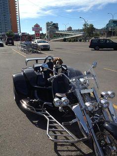 Breaking Bad, Mullets, VMAs, Beagles on Motorcycles, and Hot Carl Beagle Dog, Mullets, Beagles, Breaking Bad, Mans Best Friend, Dog Lovers, Pup, Motorcycles, Wheels