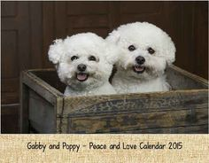 Gabby and Poppy Peace and Love Calendar 2015 - from CreatePhotoCalendars.com! This calendar is being used as a fund raiser for rescue groups. You might want to check it out. The calendar is well done.