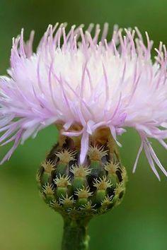 Hermoso cactus en florescencia