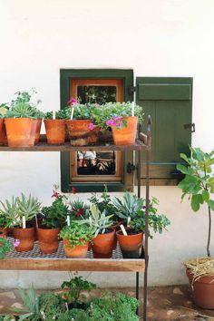 Pot plants at the Farm Shop Dream Garden, Home And Garden, Obedient Plant, Farm Fun, Farm Shop, My Secret Garden, Farm Life, Potted Plants, Shrubs