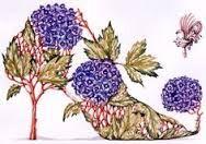 Image result for botanical footwear dennis kyte