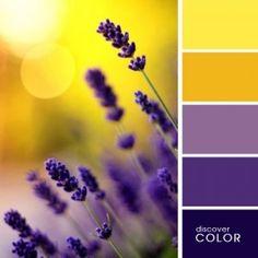Lavender | Discover Color Palette