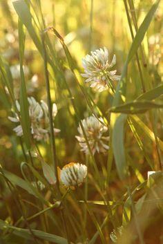 Mines of jewels for fairy crowns Summer Feeling, Summer Vibes, Spring Flowers, Wild Flowers, Flowers Canada, Garden Quotes, Summer Memories, Summer Dream, My Secret Garden