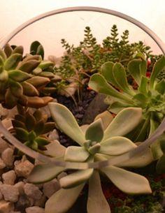 Portfolio | GlassHouseGlassHouse Succulents Garden, Living Spaces, Terrariums, Plants, Design, Terrarium, Plant, Design Comics, Planting