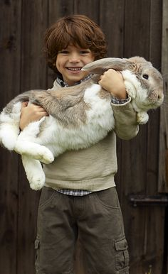 That is a RABBIT! And a live one! Just in case you want to cuddle this is the full size model.