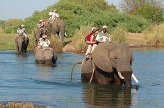 Elephant Back Safari - Victoria Falls, Zimbabwe Elephant Ride, Wild Elephant, African Elephant, African Safari, Chutes Victoria, Wine Safari, Destinations, River Lodge, Victoria Falls