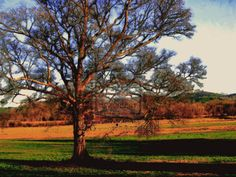 Country Field Print starting at $0.49