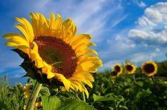 Krizova cesta zeny I. - Krížové cesty - Moja Komunita | Moja Komunita Plants, Beautiful, Plant, Planets