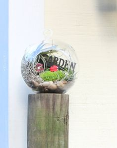 Gift idea / Air Plant Terrarium / minature garden / office gift / natural Gift / Lady bug habitat /