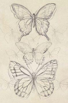 Vintage Butterfly Sketch II Canvas Artwork   June Erica Vess   iCanvas
