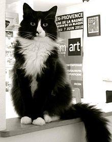 Henri the Cat- love his videos