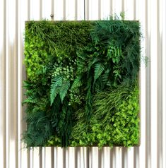 Our Moss Wall Art will bring the outdoors in. Moss Wall Art, Moss Art, Diy Wall Art, House Plants Decor, Plant Decor, Moss Decor, Vertical Garden Wall, Decoration Plante, Art Of Living
