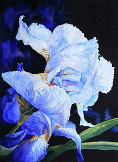 Hanne Lore Koehler - Blue Summer Iris   this would almost glow in the garden