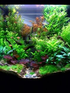 Ooooo I love this layout in the fish tank.