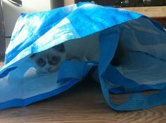Jip houdt erg veel van tassen