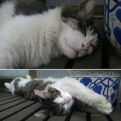 ブチャイクな寝相~。