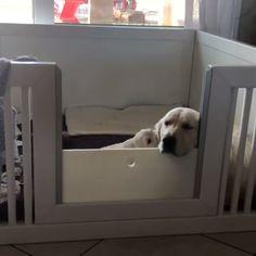 Cute Funny Animals, Cute Baby Animals, Funny Dogs, Animals And Pets, Cute Dogs And Puppies, I Love Dogs, Doggies, Chien Golden Retriever, Tierischer Humor