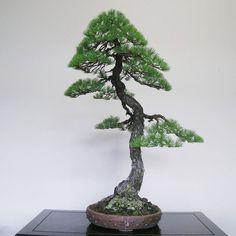 pine18.jpg 770×770 Pixel