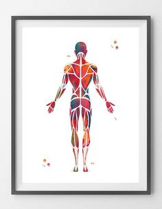 Muscular System Watercolor Print anatomy art Human Muscles medical art poster skeletal muscles giclee print human body wall art decor [09-] This is a fine art watercolor print of my original handmade watercolor, digitally reworked. ♥ MATERIALS: High quality fine art prints (Giclee), made