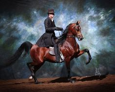 Afires Heir - 4 time National Champion Arabian Stallion