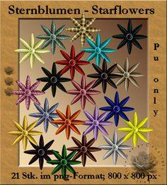 >Sternblumen   Starflowers