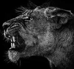 Amazing B/W Wildlife Photography by Ed Hetherington
