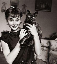 casabet64: Audrey