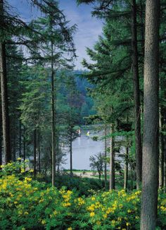 Centre Parcs, one of my favorite places in the world, where I can do so many…