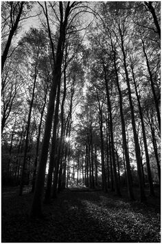 Amethyst Landscape Photography: BW Forest to Waylands Subtle Highlights, Forest Floor, Tree Trunks, Really Cool Stuff, Landscape Photography, The Darkest, Sony, Country Roads, River