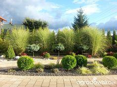 Mam chyba 1000 pomysłów, tylko czasu brak ;-) - strona 63 - Forum ogrodnicze - Ogrodowisko