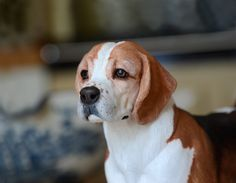 'Charlie' Beagle - by Harriet Knibbs Sculptures