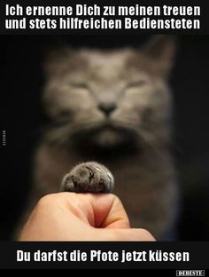 You may kiss the paw funny cat memes, funny cat videos, funny cat pictures Funny Cat Memes, Funny Cat Videos, Funny Cat Pictures, Funny Cats, Crazy Cat Lady, Crazy Cats, Cute Funny Animals, Cute Cats, Kittens Cutest