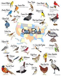 State Bird Poster Digital Download Birds 16x20 by sparrowpaper, $10.00