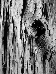 Texture of a cracked wood. smartphone photography