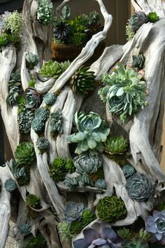 Top Succulent ideas for the decoration of the garden - The Home Decor