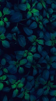 Blue green leaves lock screen wallpaper background for android cellphone iPhone Trendy Wallpaper, New Wallpaper, Flower Wallpaper, Nature Wallpaper, Screen Wallpaper, Cute Wallpapers, Iphone Wallpapers, Flower Backgrounds, Phone Backgrounds
