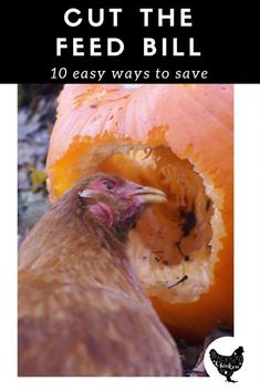 Can Chickens Eat? 100 Things to Fill Those Beaks! Want to treat your chickens? Here's 100 things you can feed to chickens to fill those happy beaks!Want to treat your chickens? Here's 100 things you can feed to chickens to fill those happy beaks! What Can Chickens Eat, Raising Backyard Chickens, Backyard Chicken Coops, Chicken Coop Plans, Keeping Chickens, Building A Chicken Coop, Diy Chicken Coop, Canned Chicken, Backyard Farming