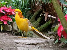 Bloedel Conservatory is one of the most popular  attractions in Vancouver, come rain or shine.  The spectacular triodetic dome capping  Queen Elizabeth Park is dedicated to the wonders of  the natural world, with an emphasis on plants  and birds.