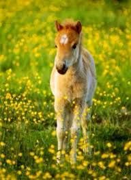 Image result for horse in a field