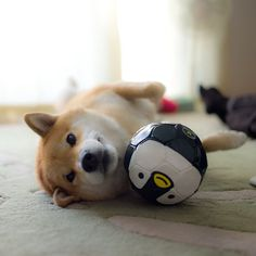 marutaro with pengie