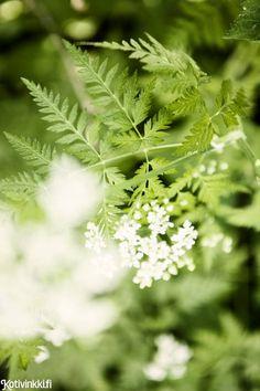 Dandelion, Garden, Flowers, Plants, Food, Ideas, Vegetable Garden, Garten, Dandelions