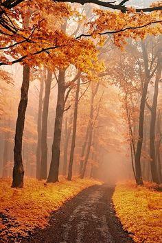 Misty autumn woods in White Carpathians, Slovakia / Czech Republic