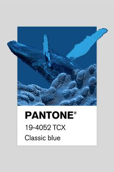 I created a series of collages and brought them to life based on Pantone color's names More on www. Posters Conception Graphique, Graphic Design Posters, Color Of The Year, Color Names, Pantone Color, Collages, Illustration, Photoshop, Type