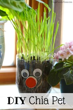 Keep the summer boredom away with this fun diy kids craft. This is an easy DIY chia pet that you can make with things you probably already have on hand. Plus you don't have to use chia seeds. We used wheat grass instead and it turned out so cute. #artsandcraftsforgirlsage4,