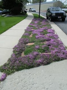 Creeping Thyme with sandstone stepping stones.Wouldn't it be fun to have this all over the city streets!