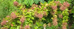 Decorando muros do jardim - Plantas de Pequeno Porte para Muros do Jardim  Muros de divisa quando em alvenaria tendem a ser monótonos e procuramos escondê-los com vegetação. Árvores não são aconselháveis devido ao problema de raízes mais fortes que poderão abalar a estrutura e alicerce do muro.  Então podemos realizar ... - http://esteiraergometrica.com.br/ecoblog/2016/10/30/decorando-muros-do-jardim/